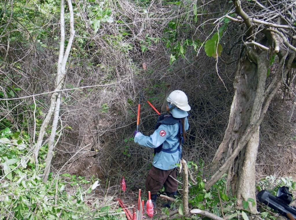 CBPD 密林の中を処理する女性ディマイナー