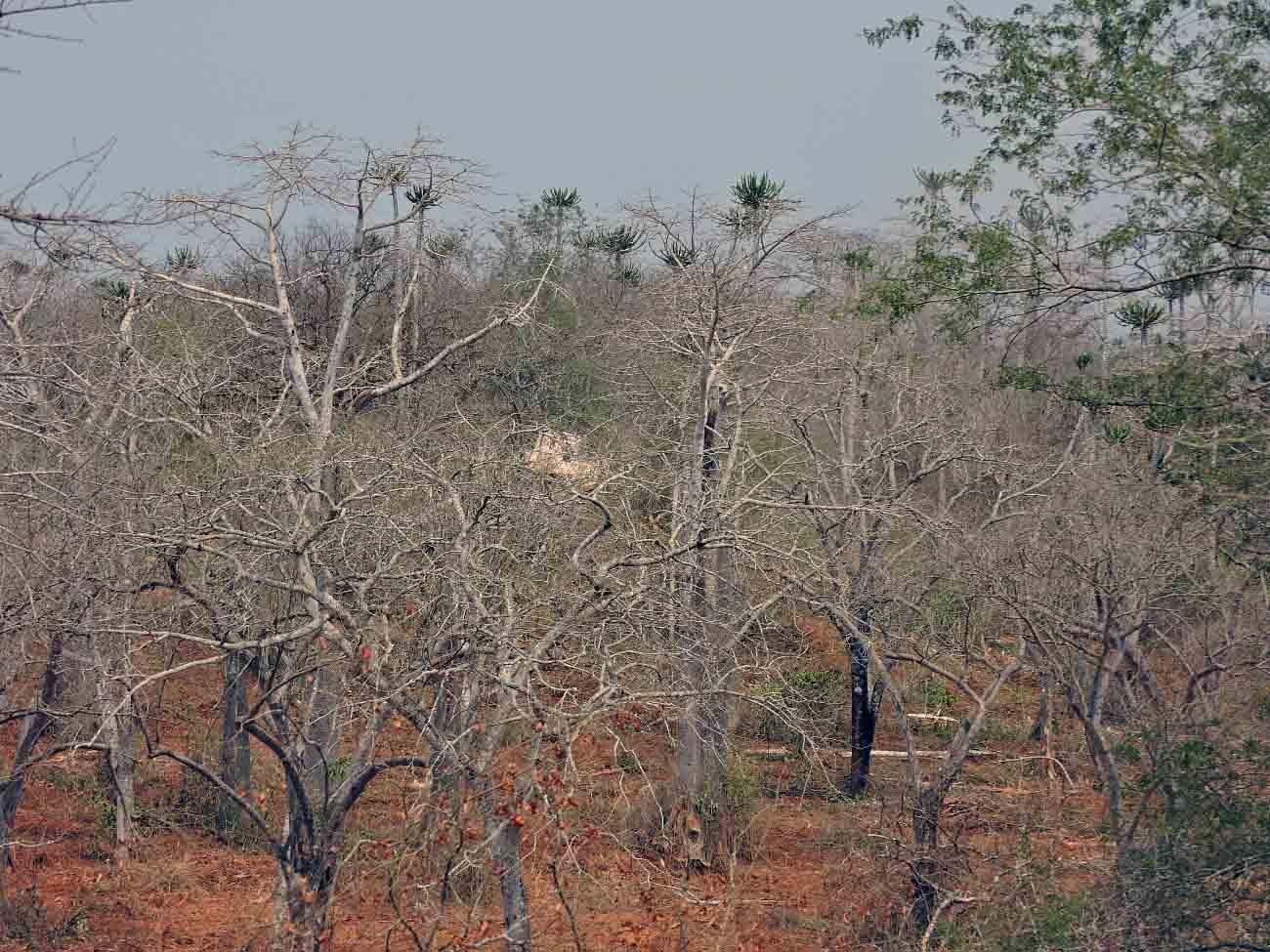 処理が進むにつれ安全地帯から遠くなるとともに大きな木は残すため撮影も困難になってきました