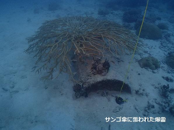 珊瑚傘に覆われた爆雷