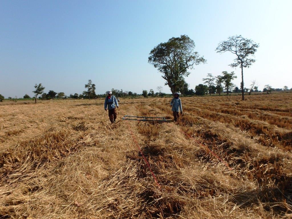 CBPD 稲の収穫を完了した稲田をイベンジャー探知